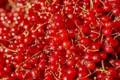 Одичалая красная деталь плодоовощей berrys еда предпосылки здоровая Стоковое фото RF