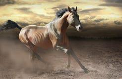 Одичалая лошадь залива скакать быстро через пылевоздушную степь стоковое фото rf
