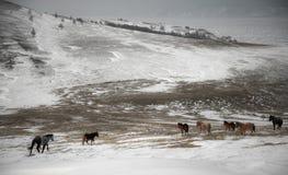 Одичалая лошадь Стоковые Фотографии RF