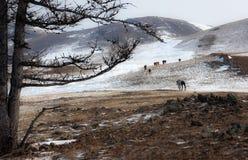 Одичалая лошадь Стоковые Изображения RF