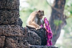 Одичалая обезьяна в Lopburi Стоковое Изображение