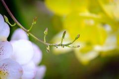 Одичалая орхидея в дождевом лесе, красоте природы Стоковые Изображения RF