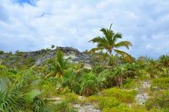 Одичалая природа на острове Эльютеры, Багамских островах Стоковое Изображение