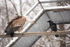 Одичалая птица животного хищника Стоковые Изображения