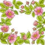Одичалая розовая рамка вектора иллюстрация штока