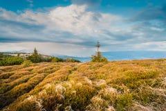 Одичалая трава на верхней части горы горы Словакия Стоковое Изображение