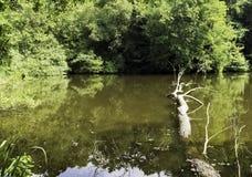 Одичалая часть озера Shefield - Uckfield, Великобритании стоковое изображение