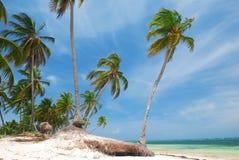 одичалое пляжа карибское стоковые изображения rf