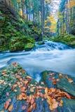 Одичалое река Doubrava, ландшафт осени Стоковая Фотография RF