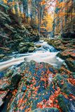 Одичалое река Doubrava, ландшафт осени Стоковые Изображения RF