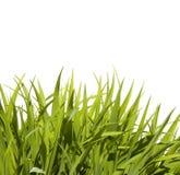 одичалое травы высокорослое Стоковые Фото