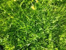 Одичалое grasd Стоковое Фото