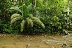 Одичалые джунгли Darien стоковые изображения rf