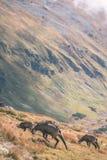 Одичалые козы в горах Стоковые Изображения