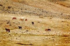 Одичалые лошади на горном склоне стоковое фото rf