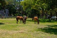 Одичалые лошади Стоковые Фотографии RF