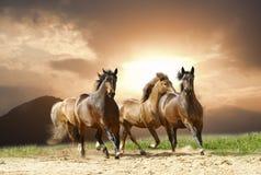 одичалые лошади Стоковое Изображение RF