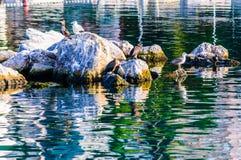 Одичалые морские птицы на утесах Стоковая Фотография