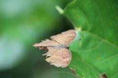 Одичалые насекомые стоковое фото