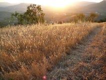 Одичалые овсы в восходе солнца раннего утра андалузском Стоковое Изображение