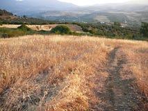 Одичалые овсы в восходе солнца раннего утра андалузском Стоковые Фотографии RF
