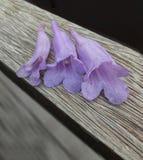 Одичалые пурпуровые цветки стоковая фотография rf