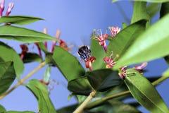 Одичалые пчелы все виды пчелы Стоковая Фотография RF