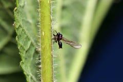 Одичалые пчелы все виды пчелы Стоковая Фотография
