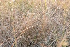 Одичалые травы в солнечном свете утра или вечера Стоковые Фотографии RF
