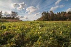 Одичалые цветки на осени field в солнечном дне Стоковая Фотография RF