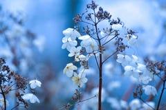Одичалые цветки природы стоковые изображения