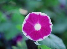 Одичалые цветки Стоковые Фотографии RF