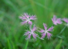 Одичалые цветки Стоковые Изображения
