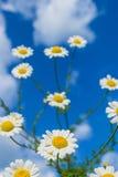Одичалые цветки стоковая фотография