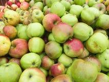 Одичалые яблоки стоковые изображения