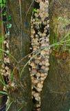 Одичалые toadstools растя в комке в дереве Стоковое Изображение