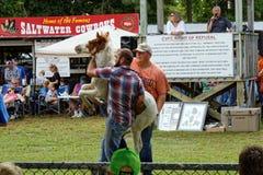 Одичалый аукцион пони на острове Chincoteague Стоковые Изображения RF
