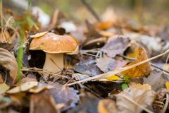 Одичалый гриб в лесе Стоковые Фото
