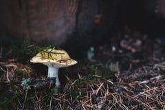 Одичалый гриб на поле леса стоковая фотография rf