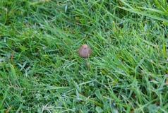 Одичалый гриб стоковая фотография