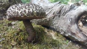 Одичалый гриб стоковое фото
