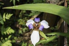 Одичалый завод цветка орхидеи в природе Стоковое Изображение RF