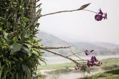 Одичалый завод цветка орхидеи в природе Стоковые Фотографии RF