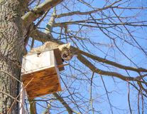 одичалый кот взобрался birdhouse для того чтобы уловить starli Стоковые Фото