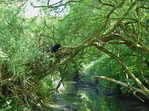 Одичалый кот в дереве стоковая фотография