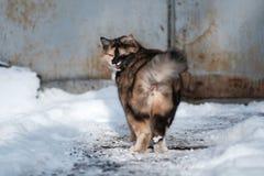 Одичалый кот в снеге Стоковая Фотография RF