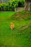 Одичалый кот Стоковое Фото