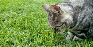 Одичалый красивый кот рядом с зеленой травой стоковые фото