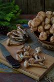 Одичалый лес величает пластинчатые грибы меда на деревянной предпосылке Mellea Armillaria Грибок Hallimasch геля меда пар Стоковые Фото