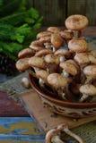 Одичалый лес величает пластинчатые грибы меда на деревянной предпосылке Mellea Armillaria Грибок Hallimasch геля меда пар Стоковое Фото